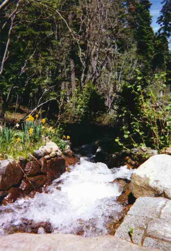 CreekthruStones